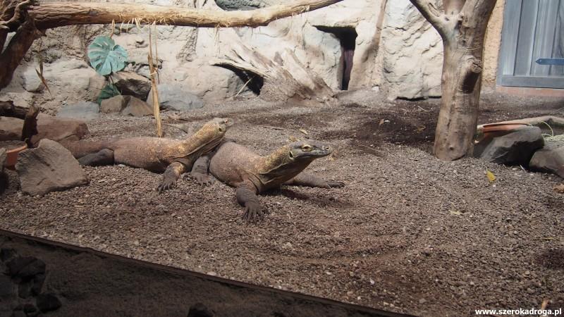 IS_Zoo Lipsk (112)