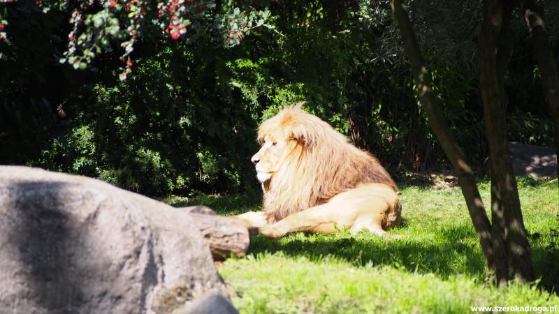 IS_Zoo Lipsk (335)