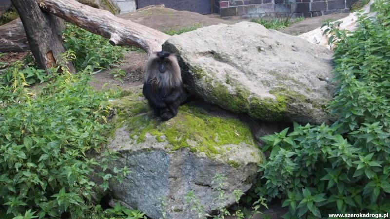 IS_Zoo Lipsk (381)