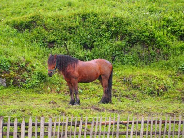 koń na drodze