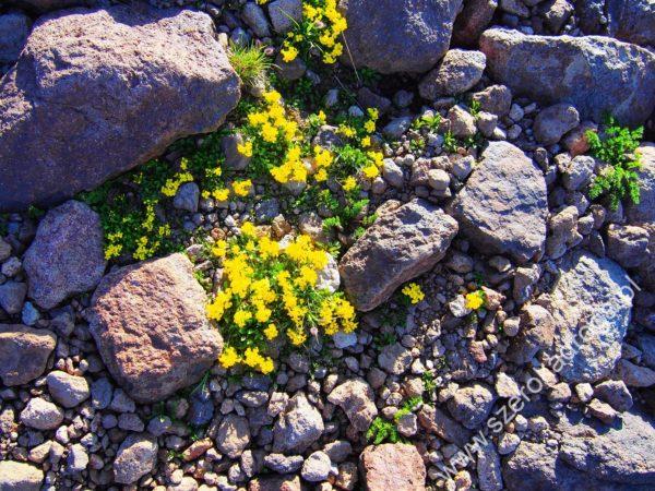 przyroda w Armenii, Aragac