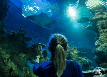 Podwodny świat na Malcie