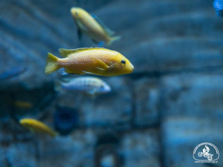 oceanarium Malta, atrakcje na Malcie