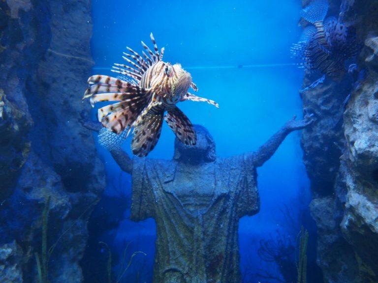 oceanarium Malta, co robić na Malcie w zimie